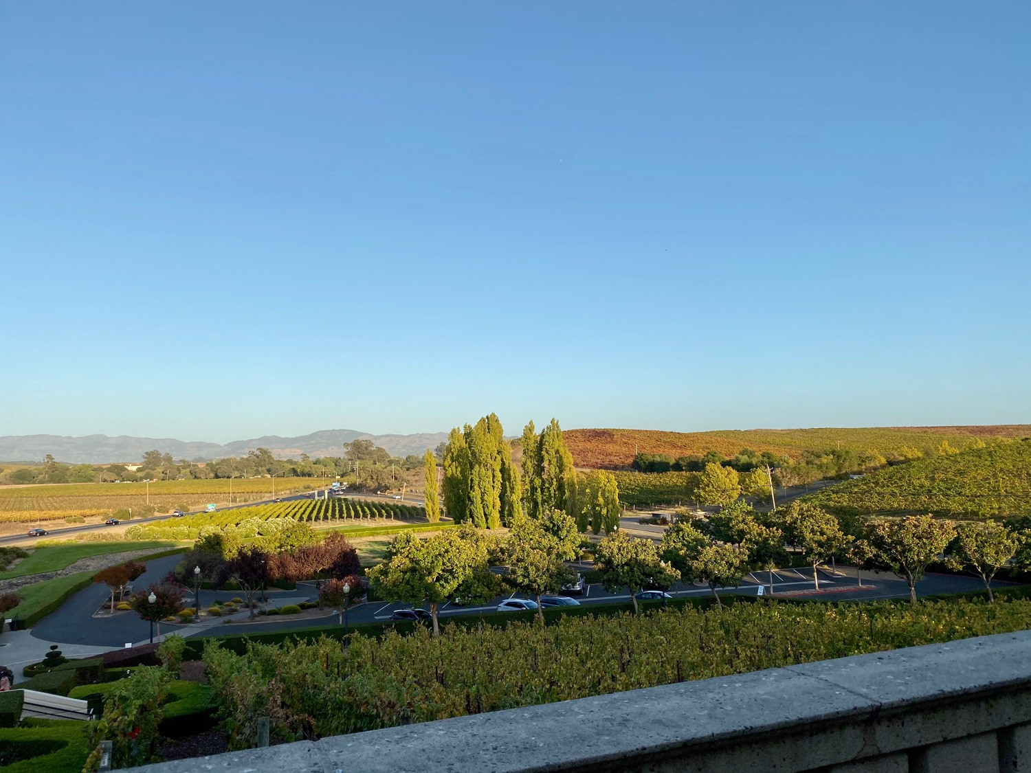 The view from Domaine Carneros
